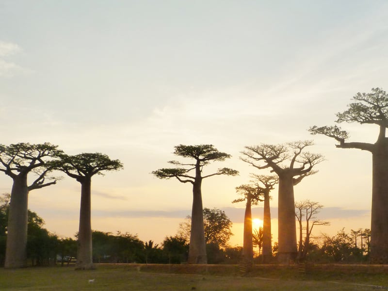 sunset_baobab alley_morondava_west_madagascar